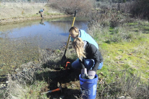 Illinois Valley students planting native species at Thompson Cr.