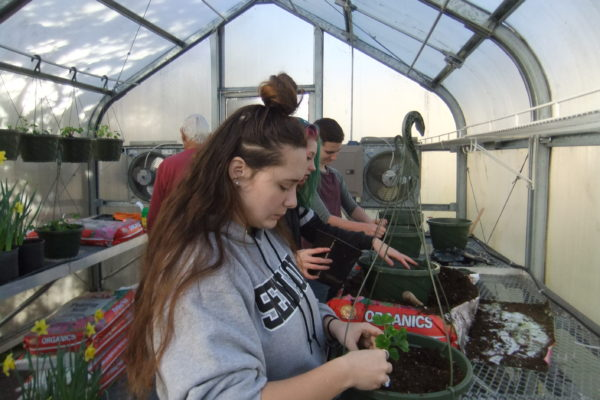 Coquille students plant geranium baskets to sale.