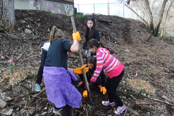 Kids Unlimited students help by planting riparian native species.